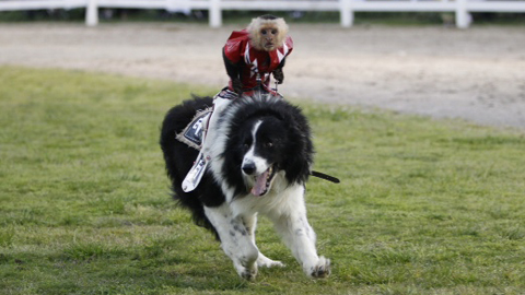 Monkey Rodeo highlights what will be a fun-filled 2012 promotional calendar.